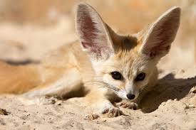 Африка Животные пустыни Сахара Развитие детей Онлайн игры  Африка животные Африки животные пустыни животные Сахары доклад для детей о животных