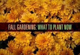 Fall Gardening What To Plant Now U2013 CaryCitizenFall Gardening