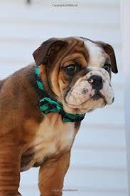 cute baby bulldog. Exellent Cute Super Cute Baby Bulldog Puppy Lined Journal Inside P