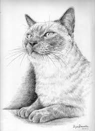 Disegni Gatti Disegno Libero