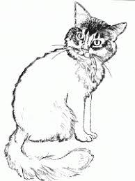 Immagini Da Colorare Dei Gatti Gatti Cartoni