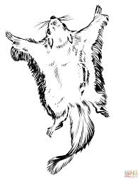 Excellent Flying Squirrel Coloring Page 97 Remodel With Flying