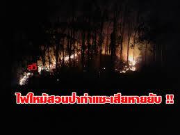 ไฟไหม้สวนป่าท่าแซะใช้เวลาควบคุม 6 ชั่วโมง - สวีนิวส์ออนไลน์