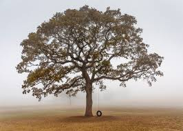 2 lone tree by john murphy