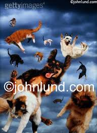 animated raining cats and dogs. Beautiful Dogs Itu0027s Raining Cats And Dogs A Funny Animal Picture Of Dogs Falling  Through The Sky Throughout Animated Raining Cats And Dogs G