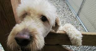 dog kennel insurance cattery business insurance