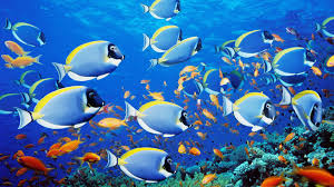 Fish Backgrounds 55 Moving Aquarium Wallpapers On Wallpaperplay