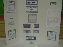 my science classroom science fair  2nd grade bones exoskeleton and endoskeletons