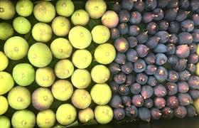 Seasonal Produce Guide| Adelaide Showground Farmers' Market