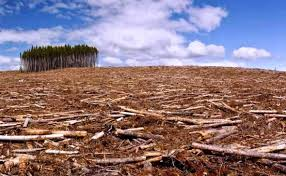 Image result for imagenes deforestacion