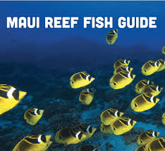 Maui Sea Creatures Identifying Fish And Underwater Life