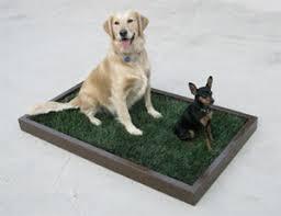 dogs bathroom grass. large indoor dog potty dogs bathroom grass