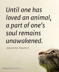 best quotes about cats cat quotes quotes about 17 best quotes about cats cat quotes quotes about animals and cats