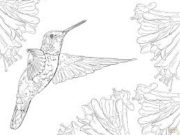 Small Picture Magnificent Hummingbird coloring page Free Printable Coloring Pages