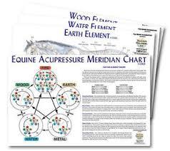 5 Element Chart Details About Equine 5 Element Chart Set Of 4 92502 Horse