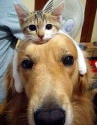 dog and cat love each other. Contemporary Other Cat And Dog In Dog And Love Each Other A