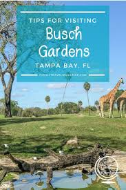 making the most of a day at busch gardens ta bay including rides