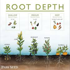 Herb Root Depth Chart Soil Roots And So Much More Planting Vegetables Garden