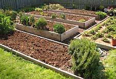 Small Picture Backyard Vegetable Garden Eartheasycom Solutions for