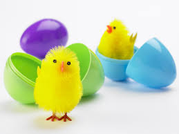 Image result for plastic egg