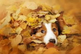 Photogallery: dogs love autumn! - Dog Friendly Cornwall