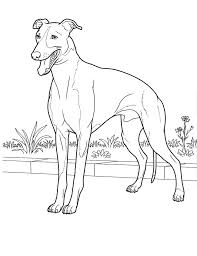 Small Picture 217 best dogs to color images on Pinterest Draw Coloring sheets