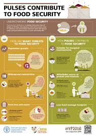 pulses contribute to food security