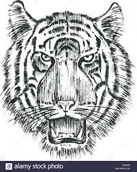 Japanese Wild Tiger Asian Animal Cat Profile Of Head Or Face