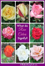 14 rose colors meanings for a