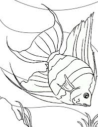 Small Picture Angel Fish Dive into Sea Floor Coloring Page Coloring Sky