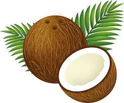 orange clipart png. file:coconut clipart cartoon.png orange png
