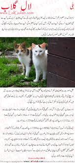 cat essay urdu billi par mazmoon my cat urdu essay mazmoon urdu cat essay urdu billi par mazmoon my cat