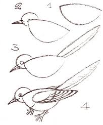 how to draw a bird step by step right on image to print art kids drawing lesson