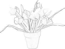 Kleurplaat Van Een Potje Met Kleine Tulpen