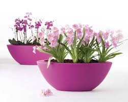 Gift A Plant This Christmas  Urban PlantersChristmas Gift Plants