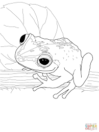 Small Picture Coqui frog coloring page Free Printable Coloring Pages