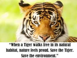 save tigers es and slogan advanes disadvanes tiger conservation