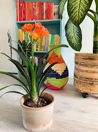Idee per arredare con le piante. Piante Da Appartamento Fiorite Guida Alla Scelta Living Corriere