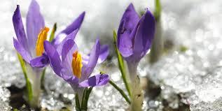 19 Best Winter Flowers - Flowers That Bloom in Winter