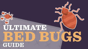 ultimate bed bugs guide signs causes