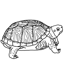 Ornate Box Turtle Bw Coloring Page