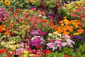 choosing blooms and foliage from the garden can create a colorful unique arrangement of flowers this is a guide about making a garden flower bouquet