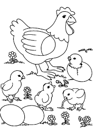 Small Picture Chicken Mother and Chicks and Eggs Coloring Pages NetArt