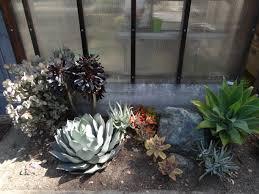 succulent border tended wordpress com