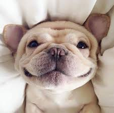 65 cute puppy pictures to brighten your day