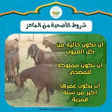 ما هي شروط الأضحية من الماعز والسن المناسب لها؟