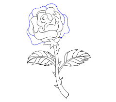 Easy To Draw Roses How To Draw A Rose In A Few Easy Steps Easy Drawing Guides