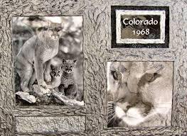 custom made mountain lions dual wildlife photo frame