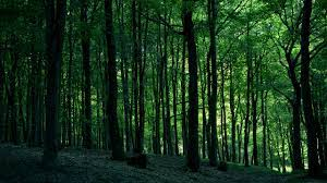2560x1440 Green Forest desktop PC and ...