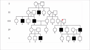 Interpreting Pedigree Charts How To Solve Pedigree Charts In 30 Seconds